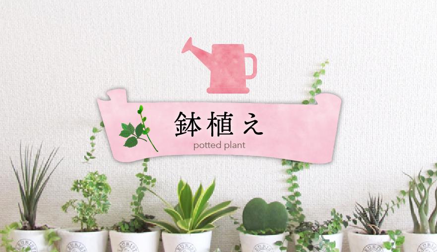鉢植えバナー